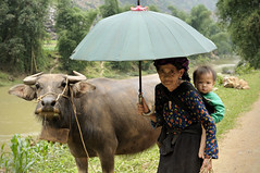 Water buffalo and grandmother of the Hmong ethnic minority in H Giang province - Vietnam (PascalBo) Tags: boy people woman umbrella outdoors costume kid buffalo nikon asia southeastasia vietnamese child outdoor femme vietnam parasol asie ethnic minority enfant hmong indigenous garon ethnicity headdress hilltribe parapluie headwear buffle d300 vitnam ombrelle vitnam hagiang ethnie ethnicgroup asiedusudest hgiang pascalboegli