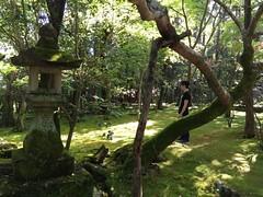 (bimong11) Tags: forest mori niwa