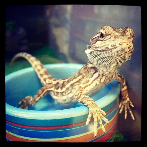 Bearded Dragon Hot Tub Party!!