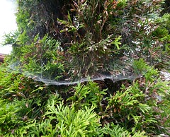 Web (Bebopgirl1969) Tags: tree garden spiderweb