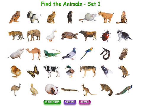 Superflash Animals - find the animals