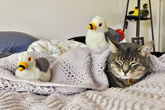 Gulls on my cat