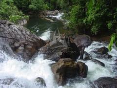 Water falls in Sinharaja Rain Forest  Sri Lanka