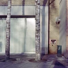 Landscape with silver birch #1 (Daire Quinlan) Tags: urban dublin colour tree 120 6x6 film silver mediumformat square landscape diy nc fuji kodak s bronica 400 mf birch sq portra hunt sqa 400asa asa400 80mm c41 sqai