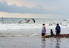 Gulls at The Beach (Daveyal_photostream) Tags: ocean blue sea sky seagulls playing seascape beach birds kids children flying nikon waves swells seashore wildwoodnewjersey meandmycamera roughwater nikor roughocean mycamerabag d7000