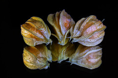 Physalis (grazanna) Tags: stilllife reflection fruit physalis riflesso frutto odbicie owoc alkekengi supercontest