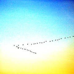 flight toward the future (tonnyc) Tags: trip sky square geese flight future migration vformation leadtheway