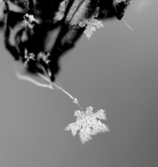 Ice ice baby (*Lucy*1) Tags: winter ice one 1 crystal grain lincolnshire single lone