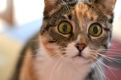 Big Eyes (abiodork) Tags: bigeyes prada