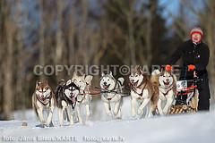Sled dogs 11.02.2012 Kamparkalns (KARTE FOTO T29440771) Tags: dogs race husky sled sleddog sui haskiji