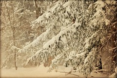 "15"" of snow (blmiers2) Tags: trees winter white snow cold nature photography nikon snowfall 2012 3100 blm18 blmiers2"