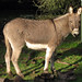 """The Daily Create - Today's Special: Burro on the Hoof • <a style=""""font-size:0.8em;"""" href=""""http://www.flickr.com/photos/36196688@N06/6876413849/"""" target=""""_blank"""">View on Flickr</a>"""