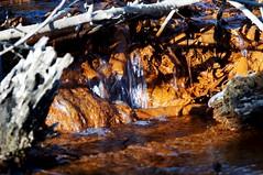 Spring stream (rexp2) Tags: winter nature water nikkormicro105mmf28 sonynex5n emounttmountotherlensornolens