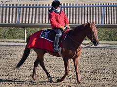 2012-02-09 (165) r6 outrider (JLeeFleenor) Tags: laurelpark marylandracing horses racing marylandhorseracing chestnut outrider md thoroughbreds equine equestrian cheval cavalo cavallo cavall caballo pferd paard perd hevonen hest hestur cal kon konj beygir capall ceffyl cuddy yarraman faras alogo soos kuda uma pfeerd koin حصان кон 马 häst άλογο סוס घोड़ा 馬 koń лошадь maryland