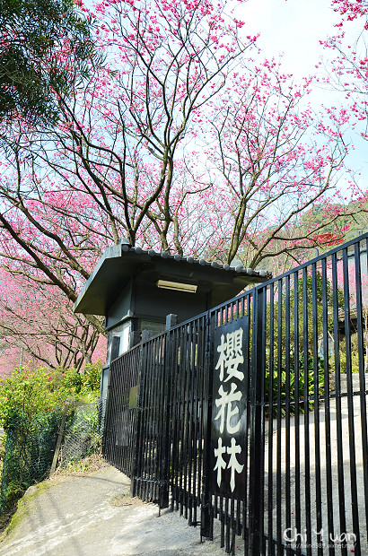 2012陽明山花季18.jpg