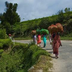 Ritorno dai campi di T (Tati@) Tags: travel india women tea kerala fields teapickers