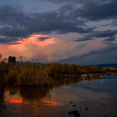 Winter light (Tati@) Tags: winter sunset tramonto sardinia flamingos natura colori riflessi saline saltpan fenicotteri stagnodimolentargius mygearandme mygearandmepremium mygearandmebronze mygearandmesilver mygearandmegold mygearandmeplatinum mygearandmediamond