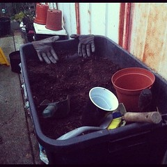 My Potting Table (joeysplanting) Tags: valencia square gloves squareformat trowel pottingsoil pottingtable iphoneography cargotrunk instagramapp uploaded:by=instagram