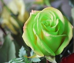 (Cliff Michaels) Tags: flowers photoshop nikon 55200mm d5000 pse9