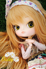 Daisy  (Rewigged and Rechipped) (Aaliyoh Boy) Tags: doll dal daisy groove junplanning rewigged dotori rechipped aaliyoh aaliyohboy obitsuhybrid
