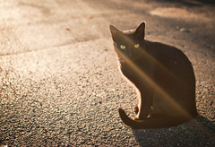 (~Abby) Tags: light sunset sun sunlight black cat canon lensflare rays 30d sigma30mm14 thecatwhoturnedonandoff