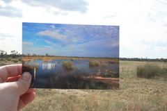 Now and then Gurra Floodplain (Callie Nickolai) Tags: pelican egret berri highriver riverland floodplain gurra 2011flood abcopenriverland abcopen:project=nat2 callienickolai