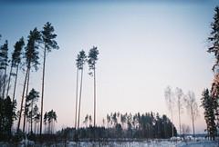 trees (Liis Klammer) Tags: trees winter sky snow film analog forest 35mm evening woods estonia zenit eesti zenitet
