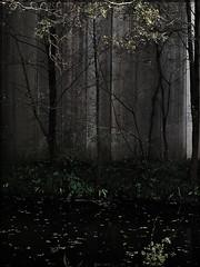 El bosque encerrado 2 (Regine Sahmel) Tags: wood sepia forest arbol natura bosque wald baum