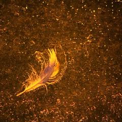 Plume de mouette dans la glace (SMartine ♫♫) Tags: snow france hiver 03 neige allier vichy auvergne glace plume 22février martinesodaigui