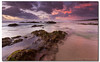 I've learned that you can get by on charm for about 15 minutes. After that, you'd better know something. (danishpm) Tags: ocean pink clouds sunrise canon sand rocks surf australia wideangle nsw aus 1020mm manfrotto sigmalens northernnsw eos450d hastingspoint 450d tweedshire sorenmartensen hitechgradfilters 09ndreversegradfilter