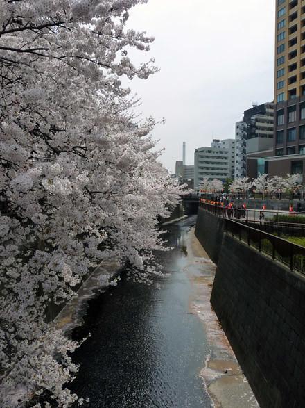 sakura meguro