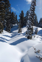 Powder and Pines (Talo66) Tags: winter snow mountains nature forest landscapes scenery hiking idaho pines snowshoeing highway21 boisenationalforest