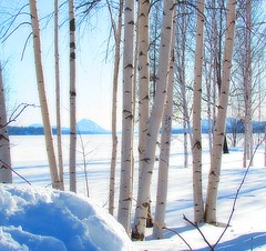 Paysage hivernal au mois de mars (Lara-queen) Tags: blue winter mars white canada landscape march quebec magog hiver bleu paysage blanc 2012 quynhvu saariysqualitypictures laraqueen canonpowershotsx30is