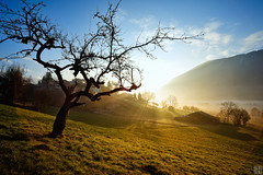 A new day starts (gregor H) Tags: morning tree sunrise landscape austria spring village warmth hills valley risingsun warmlight morningmist carlzeiss vorarlberg zf tosters distagont3518