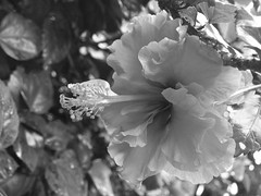 6 (Tieto Photography Club) Tags: keerti
