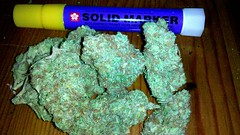 TANGERINE DREAM (RUSTY O'LEUM) Tags: indoor 420 medical thc cbd marijuana dank hydroponics tangerinedream