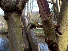 Mon arbre a de l'acnée