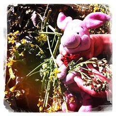 Ferkel: gardening