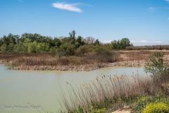 Balsa del Cascarro, La Alfranca (Jose Antonio Abad) Tags: park parque espaa ro river garden lago spain paisaje zaragoza ebro lanscape aragn laalfranca josantonioabad