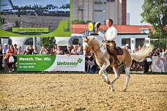 Pintos_Equitana_2016-0590 (tokerpress) Tags: messe pferde shou pintos tokerpress alexandertoker equitanaopenair ctokerpress2016 gestütgoldenepintos