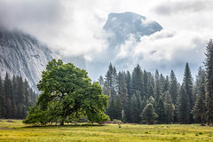 Behind the Clouds (Kirk Lougheed) Tags: california sky usa cloud clouds landscape nationalpark spring unitedstates outdoor yosemite halfdome yosemitenationalpark yosemitevalley cooksmeadow