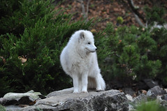 DSC_0677 (d90-fan) Tags: autumn animals tiere herbst hirsch braunbr brownbear geier waschbr wolfes luchs badmergentheim wlfe