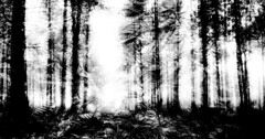 Forest (catkin314) Tags: trees blackandwhite bw leaves silhouette multipleexposure newforest