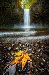 Abique falls_ (Vasilic Bogdan) Tags: autumn mountains cold reflection fall nature rain oregon waterfalls leafs creeks