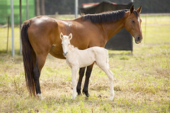 Mother and child - Explored 22.05.2016 (IanMackie) Tags: horse animal spain child outdoor birth mother andalucia explore paddock foal lacapilla explored