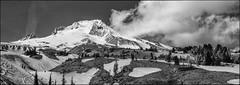 Mount Hood (greenschist) Tags: trees usa snow oregon blackwhite mthood 6x17 fujifilmx100s