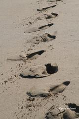 33-070505 Spanien 1 114 (hemingwayfoto) Tags: andalusien fusspur natur reise sand spur strand