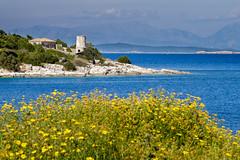 Lighthouse and Flowers (Rupert Brun) Tags: flowers sea lighthouse flower greek spring mediterranean greece kefalonia ionian fiskardo greekisland