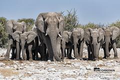 Namibia_060516_0850 (Roni Chastain Photography) Tags: namibia etosha park wildlfe animals africa safari etoshapark