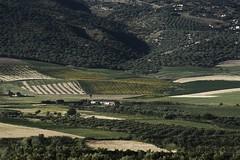 Overlook (clémence·Liu ) Tags: mountains green nikon olive morocco maroc atlas plain moroccan d800 volubilis berbers clemenceliu